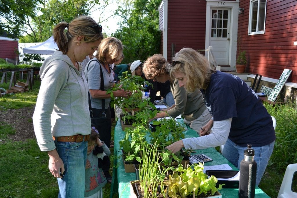 Hingham residents help with Holly Hill Farm's seedling sale