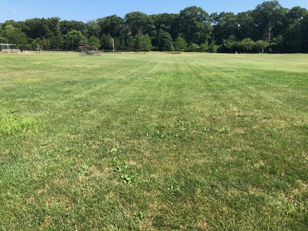 Carlson Field after reseeding project this past spring.