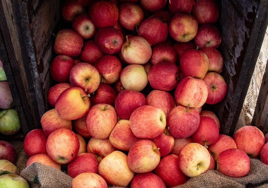 Photo courtesy of Hingham Farmers Market. For more photography from the Hingham Farmers Market, visit https://www.hinghamfarmersmarket.org/#gallery.